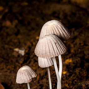 My Mushrooms by Ramlan Abdul Jalil - Nature Up Close Mushrooms & Fungi