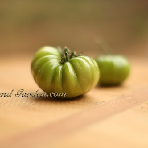 "Healthier Crunchier ""Baked"" Fried Green Tomato"