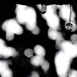 Droplets in Monsoon by Ashis Halder - Abstract Macro ( falling, monsoon, raindrops, droplets, india )