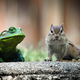 Who's the New Guy? by Colleen Bruso - Animals Other Mammals