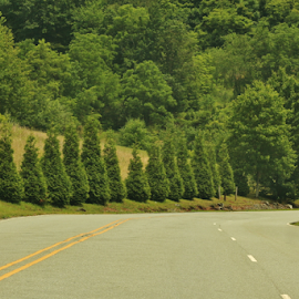 Cedar Pines by Terry Linton - Transportation Roads (  )