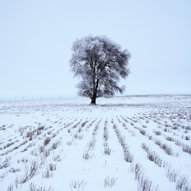 Cold Gray Day by Brian Robinson - Landscapes Prairies, Meadows & Fields ( snowy field, frosty tree, gray winter )