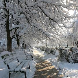 by Liviu Nanu - City,  Street & Park  City Parks ( park, snow, trees, alley )