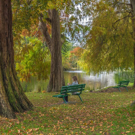 Knitting in the Park by Beth Rand - City,  Street & Park  City Parks ( autumn, serenity, fall, parks, colours )