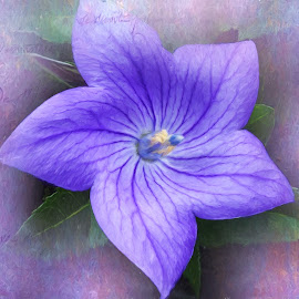 Balloon Flower by Millieanne T - Digital Art Things