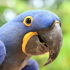 Parrot by Eurico David - Animals Birds