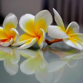 reflection 01 by Basuni Radi - Novices Only Objects & Still Life (  )