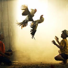 Adu Ayam by Didik Harianto - People Street & Candids
