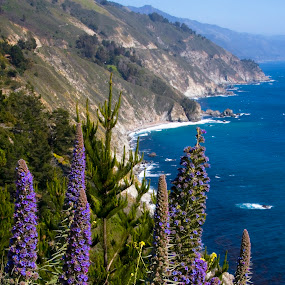 Big Sur Coast by Gale Perry - Landscapes Waterscapes ( yellow flowers, mountains, blue sky, big sur, purple flowers, california, flower foreground, coast,  )