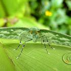Mariposa (Exquisite Emerald)