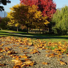 by Branimir Ficko - City,  Street & Park  City Parks