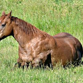 by Linda Woodworth Sulla - Animals Horses