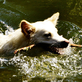 Teo by Marcello Toldi - Animals - Dogs Playing