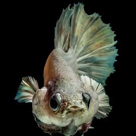 expression by Arya Suartawan - Animals Fish ( #beta #photography #bali #macro #animal )