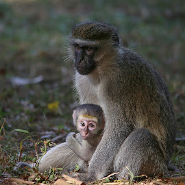 A Mother's Love by Lou-Anne Bidal - Animals Other Mammals