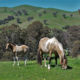 Mare and Foal by Sarah Harding - Novices Only Pets ( pet, horse, novices only, animal, foal )