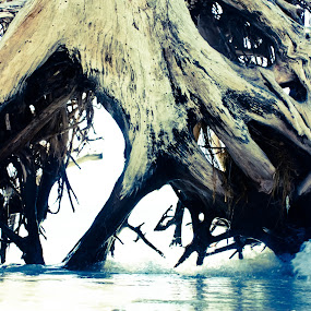 Water Roots by Alena Purvis - Nature Up Close Trees & Bushes ( water, tree roots, sand, tree, roots, ocean, beach )