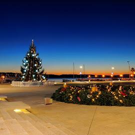 Christmass Tree by Dalibor Jud - City,  Street & Park  Skylines ( advent, crikvenica, adventcrikvenica, christmas lights, nightscene, croatia, christmas tree )