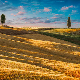 Twins by Igor Rosina - Landscapes Prairies, Meadows & Fields ( tuscany, wheart field, summer, cypress, evening )
