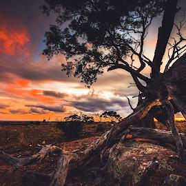 fallen tree by Jaime Gomez - Landscapes Prairies, Meadows & Fields
