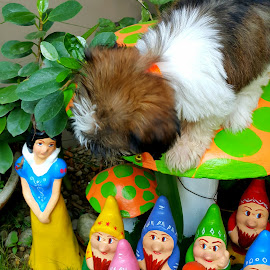 Snow White,  7 Dwarfs and a Snooping Puppy by Corazon Quimbo - Artistic Objects Other Objects (  )