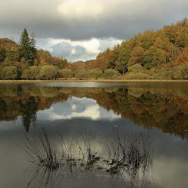 Autumn in The Lake District by Carol Lauderdale - Landscapes Waterscapes ( autumn colours, yew tree tarn, english lake district, reflections in water, coniston )