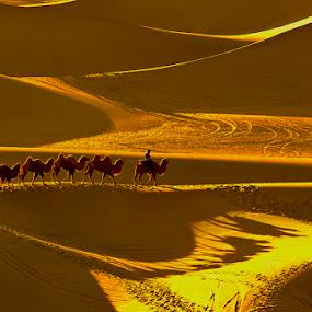 Leading the Camel by Goh Poh Leong - Landscapes Travel