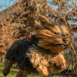 Baby girl by Natasja and Martijn - Animals - Dogs Running ( winter, grass, baby girl, dog, running )