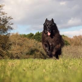 Run free by Cheryl Peach - Animals - Dogs Running
