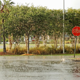 Florida Sunshine by Don Bates - City,  Street & Park  Street Scenes ( jacksonville, florida, downpour, summer, rain )