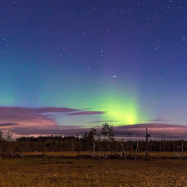 Northern Light at Paradise. by Janne Monsen - Landscapes Prairies, Meadows & Fields ( northern lights, landscape, paradise, kuikka, prairie )