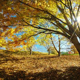 by Zdenka Rosecka - Nature Up Close Trees & Bushes
