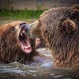 by James Harrison - Animals Other Mammals