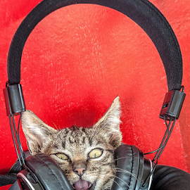 Music power! by Jesus Giraldo - Animals - Cats Playing ( contrast, music, cat, red, funny, kitty, headphone )