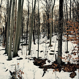 by Doug Hilson - Landscapes Forests