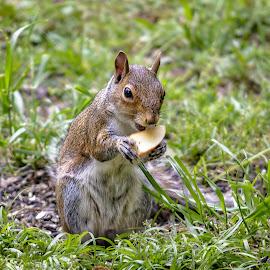 Look what I found by Carol Plummer - Animals Other Mammals