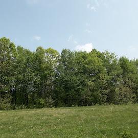 Гора by Georgi Kolev - Landscapes Forests ( небе., слънце., гора., ден., поляна. )