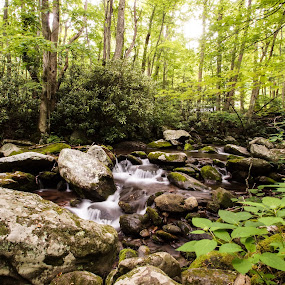 Stream by Zach Boudreaux - Landscapes Forests ( stream, beautiful, summer, forest, long exposure, rocks )