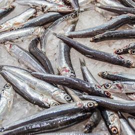 by Vicente Marzal Senior - Animals Fish