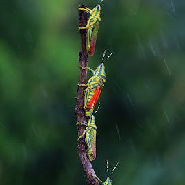 Pilgrimage in rain by Nelson Thekkel - Animals Insects & Spiders