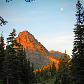 Early morning alpenglow at Two Medicine by Rhonda Tucker - Landscapes Mountains & Hills ( mountains, dawn, trails, hiking, glacier national park )