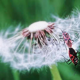 by Iveta Franzová - Animals Insects & Spiders
