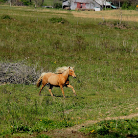 see spot run by Terry Herndon - Animals Horses