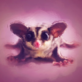 Sugie by Beth Ann - Painting All Painting ( sugar glider, pet, digital art, glider, painting )