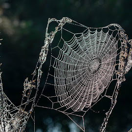 by Keith Ellington - Nature Up Close Webs