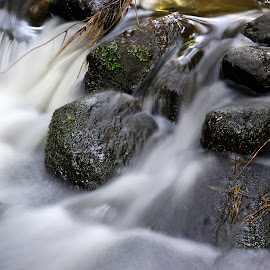 Stones and water by Gil Reis - Nature Up Close Rock & Stone ( forests, water, macro, nature, rivers, stones )
