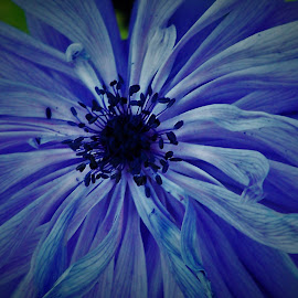 Flower by Sarah Harding - Novices Only Flowers & Plants ( plant, nature, novices only, garden, flower )