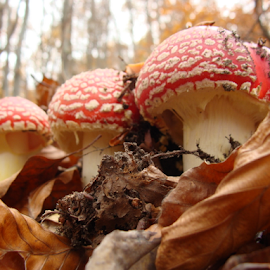 In the wood by Babica Slez - Nature Up Close Mushrooms & Fungi