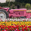 John Deere Gr..., er, uh, Pink? by Craig Pifer - Transportation Other ( john deere, pink, tulips, transportation, tractor, flower, wooden shoe tulip farm )