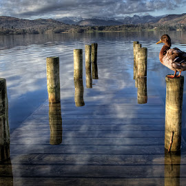 by Adrian Lines - Landscapes Waterscapes
